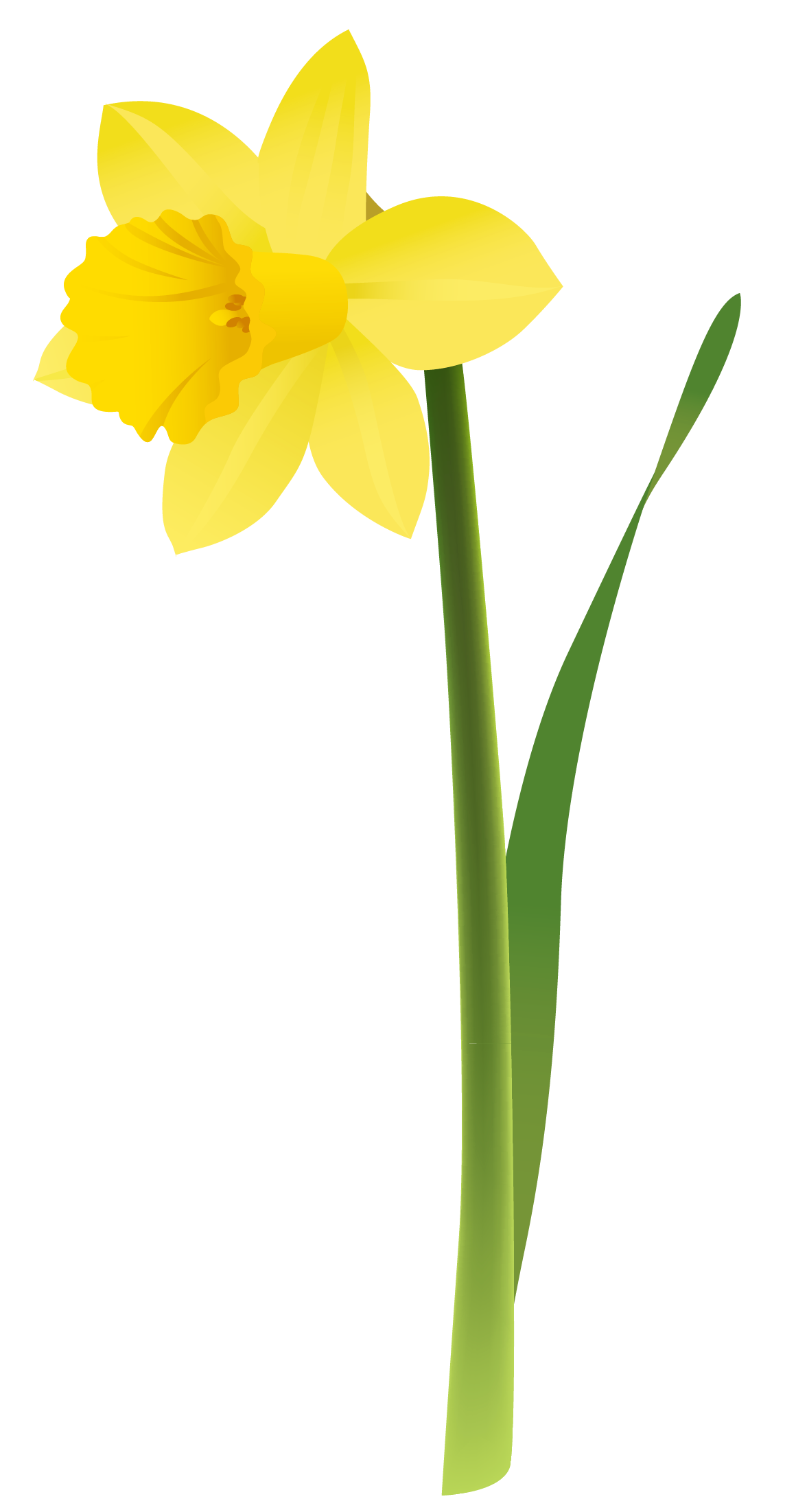 Daffodil Clip Art Free Cliparts Tattoos Pinterest Daffodils