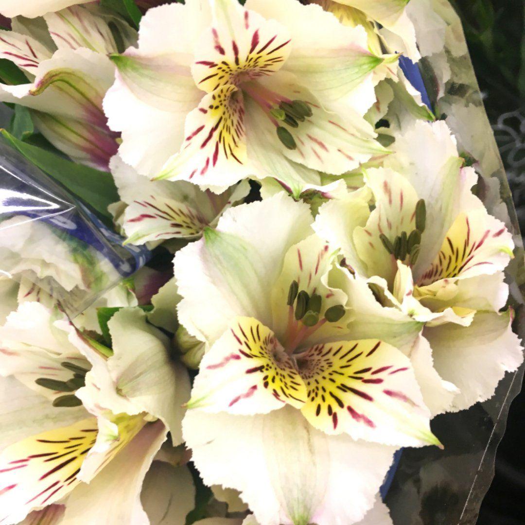 Alstroemeria White Diyflowers Diyweddingflowers Affordableflowers Weddingaffo Diy Flower Arrangements Wedding Wedding Flower Arrangements Wedding Flowers