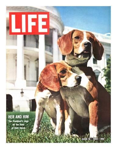 Premium Photographic Print President Johnson S Beagles June 19