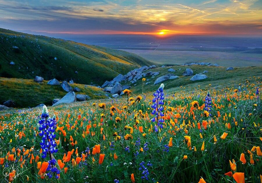 Beautiful Northern California Drop Top: Beautiful Central Valley Flowers And Sunset