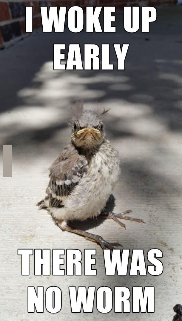 bird memes...