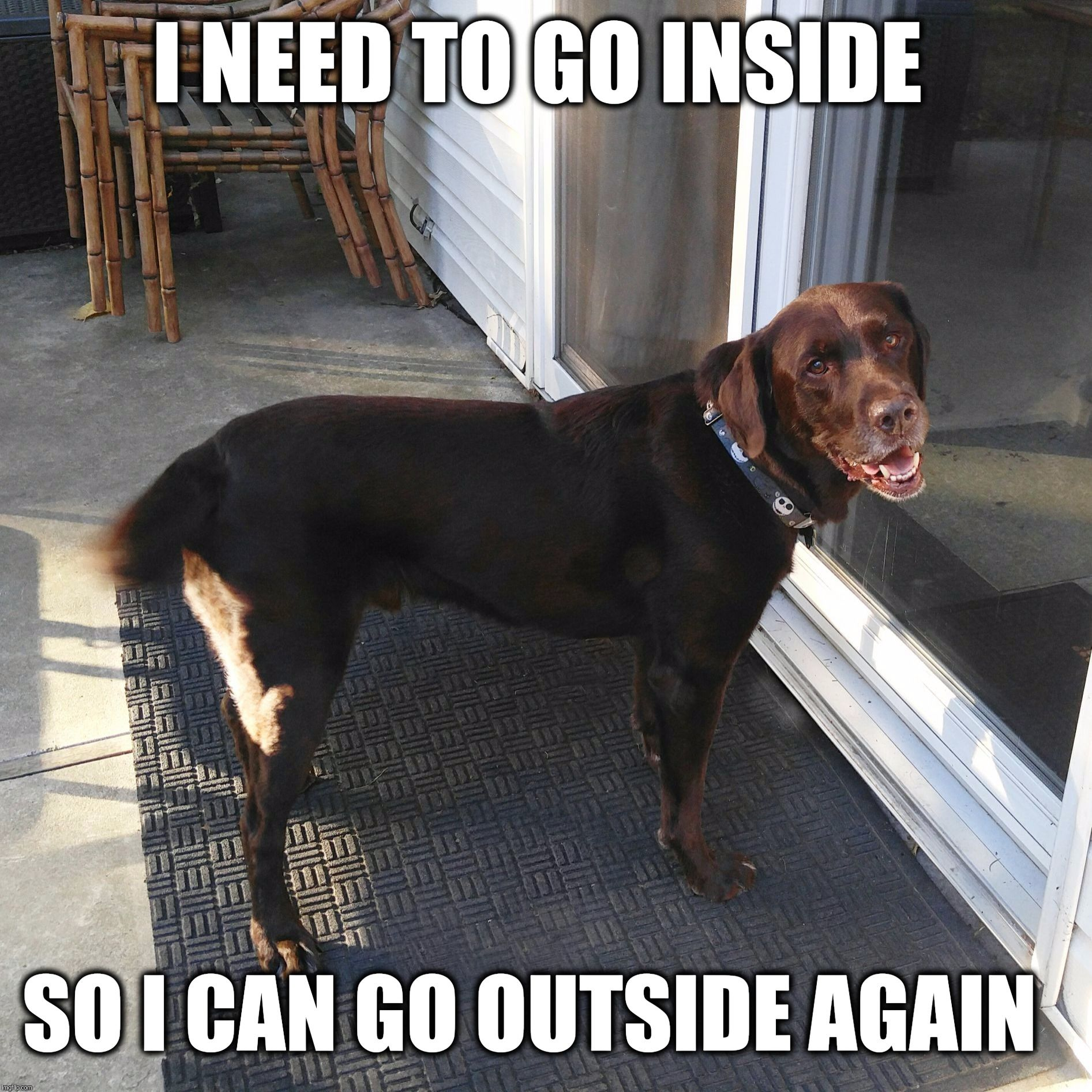 Labradorluv Allthingslab Labhq Funny Dogs Funny Dog Pictures Dog Memes