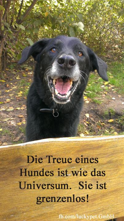 Die Treue Eines Hundes Ist Wie Das Universum Sie Ist