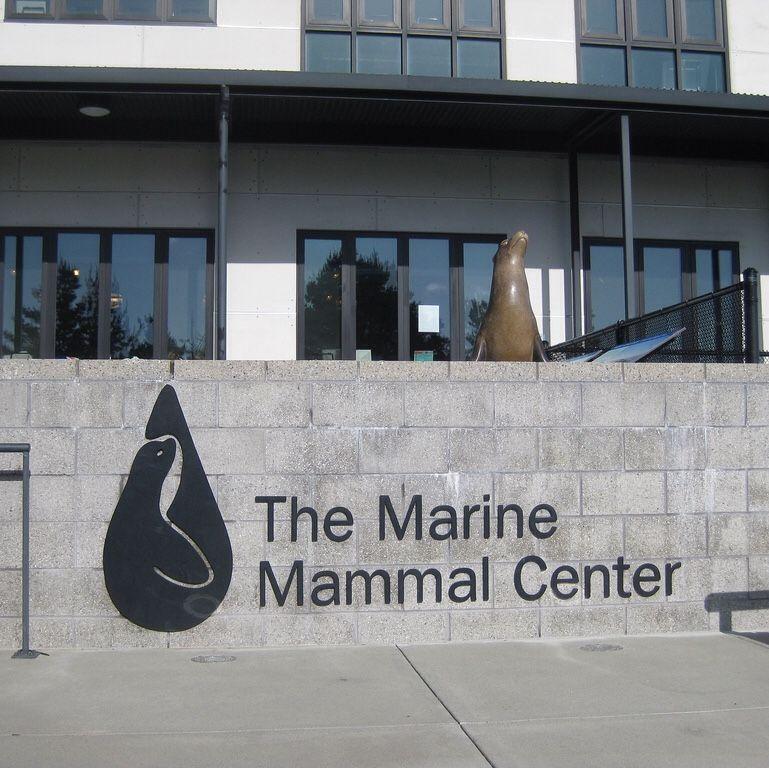 19+ Shoreline central animal hospital ideas in 2021