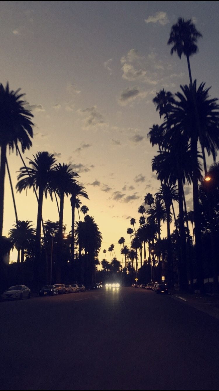 Summer Breeze Shawn Mendes Palm Trees Wallpaper Backgrounds Hipster Hipsters Background Images Palms