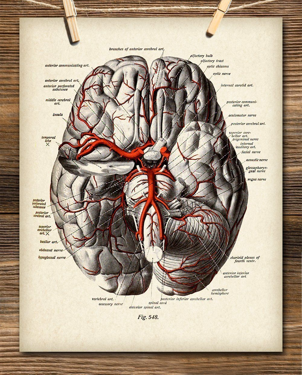 Brain Diagram With Veins - 11x14 Unframed Art Print ...