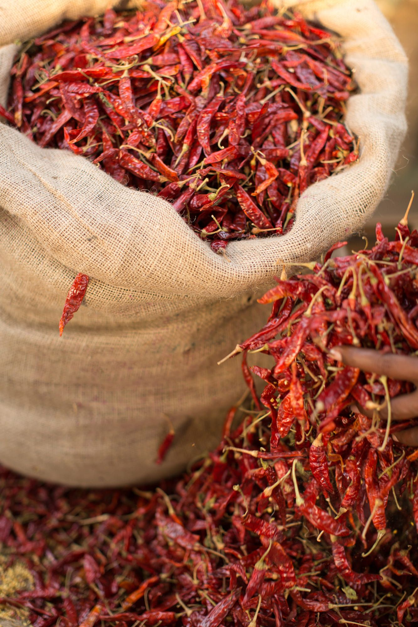 Dried chillies, Sri Lanka, Asia