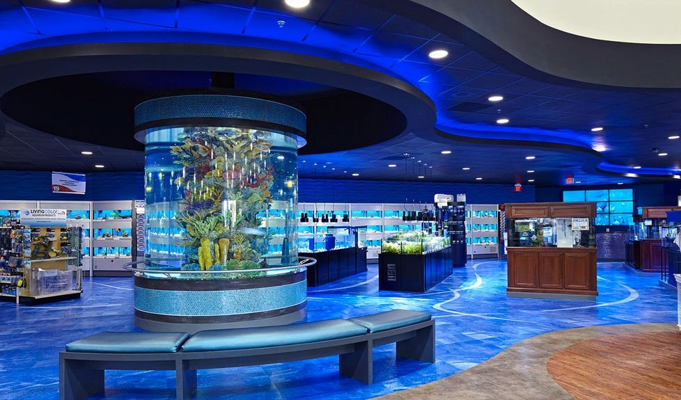 Cool aquarium pet store interior design places spaces for Fish and pet store