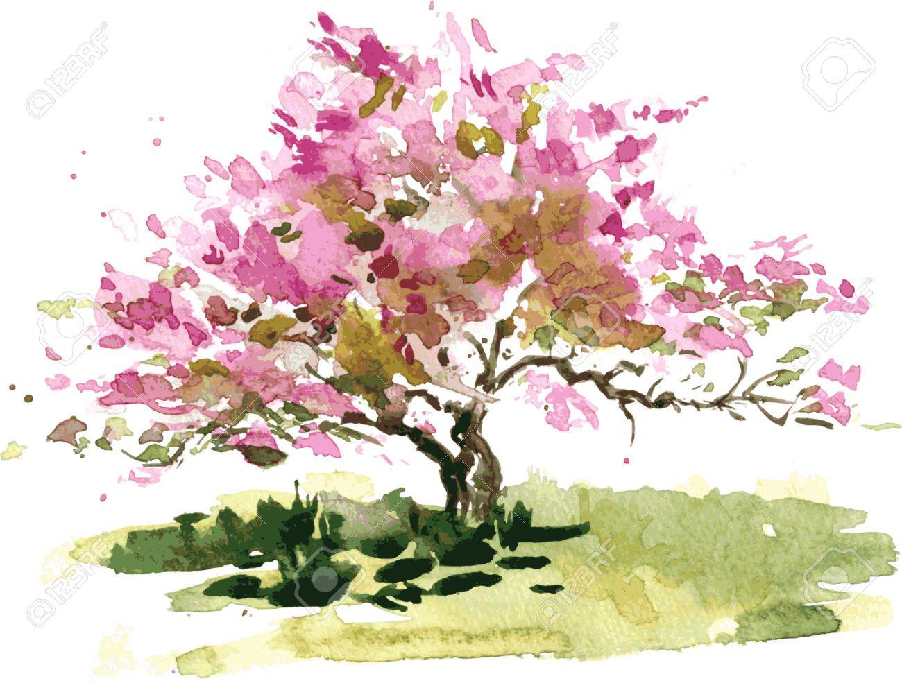 Fiore di ciliegio disegno albero da acquerello acquerello - Ciliegio da giardino ...
