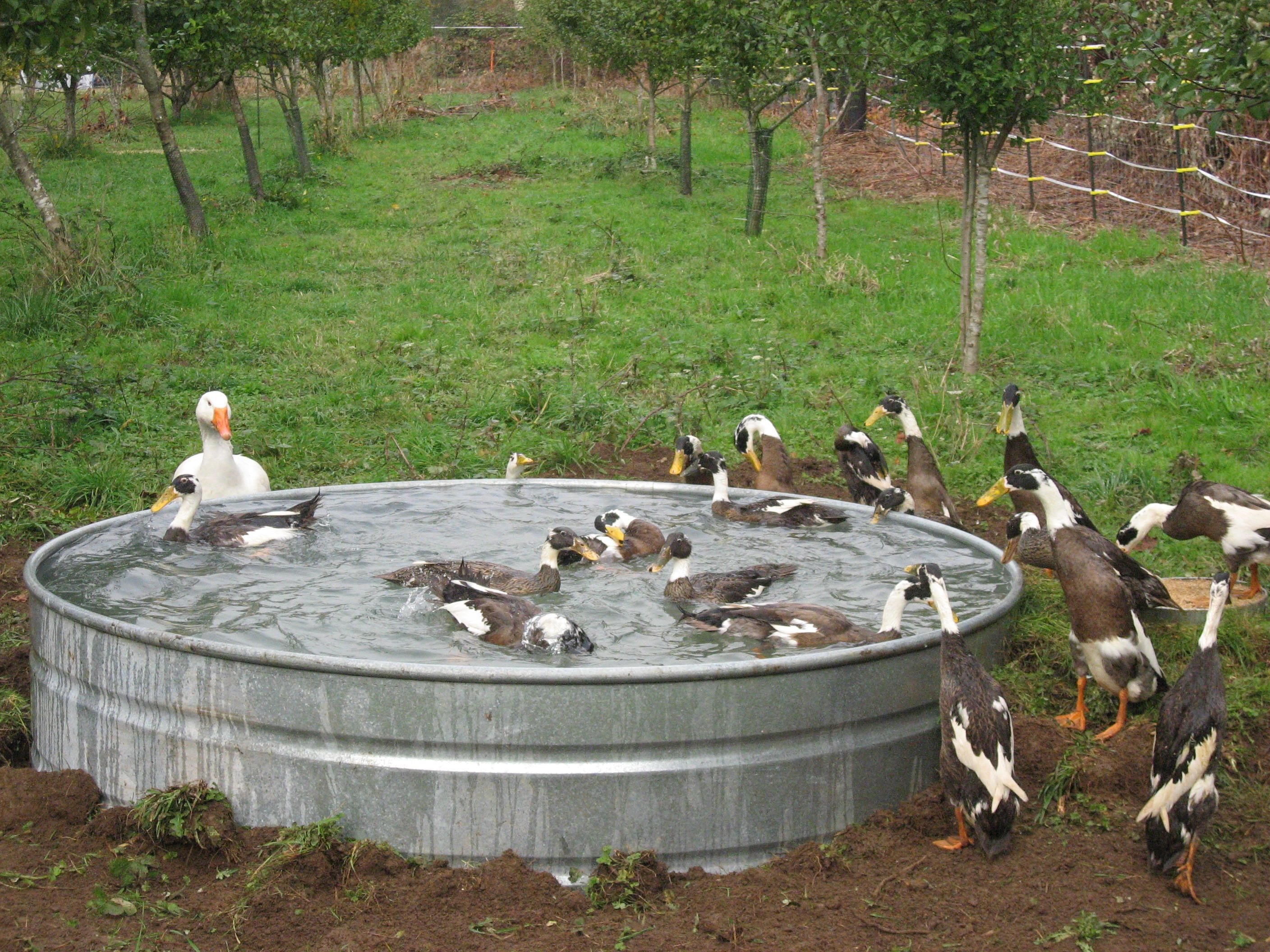 This is what i need for my ducks and geese fowl play for Homemade biofilter for duck pond