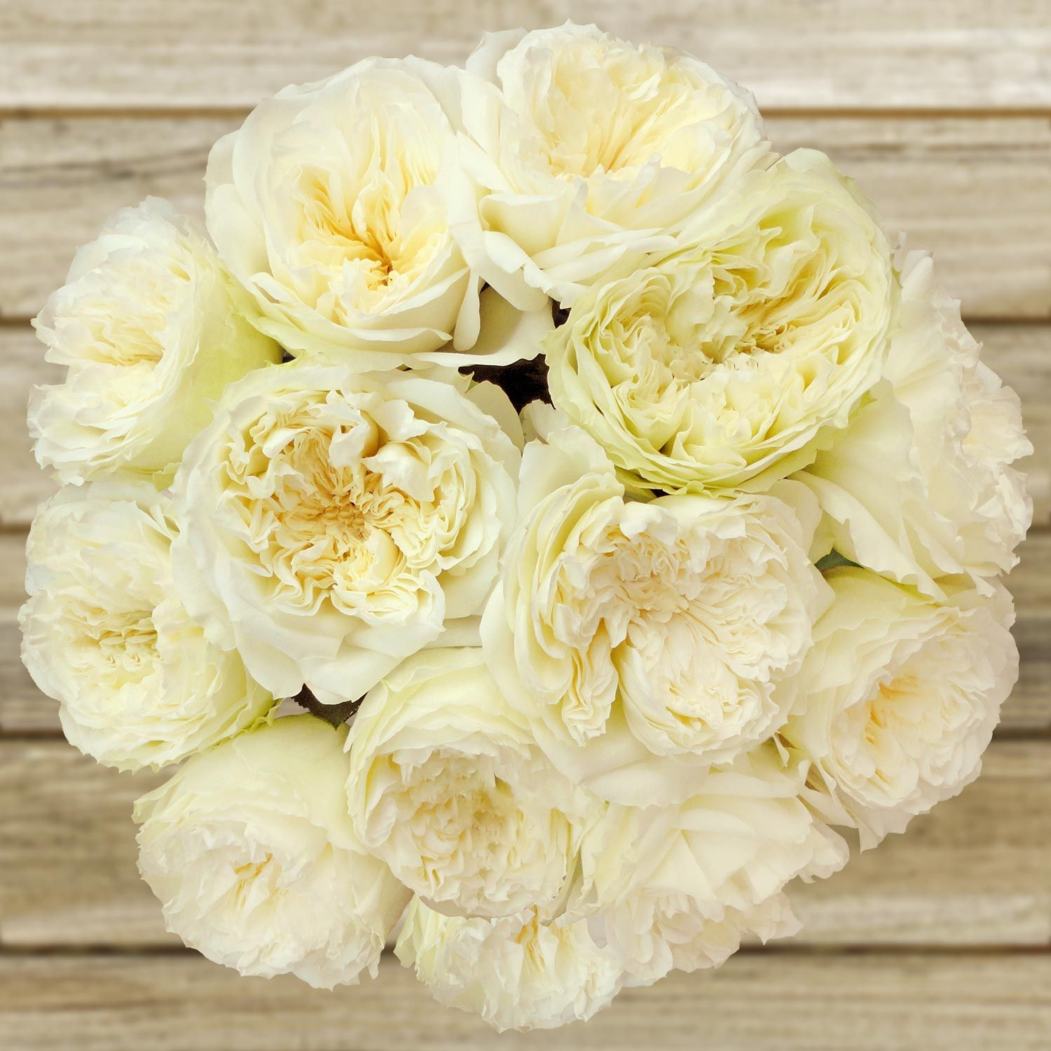 Hannah Gardens On Twitter Bulk Flowers Online Wholesale Roses Ivory Flowers