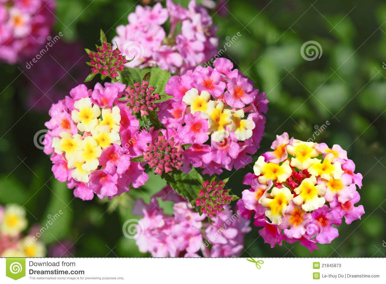 Yellow And Pink Flowers Google Search Cool Pinterest Flowers