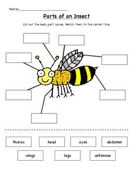 Pin On Speech And Language