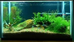 Cleaning of aquarium on regular basis is needed to keep fishes healthy. Our expert at Fishy Business can help you in cleaning and maintaining your aquarium. We strive to you our best services at very nominal charges.