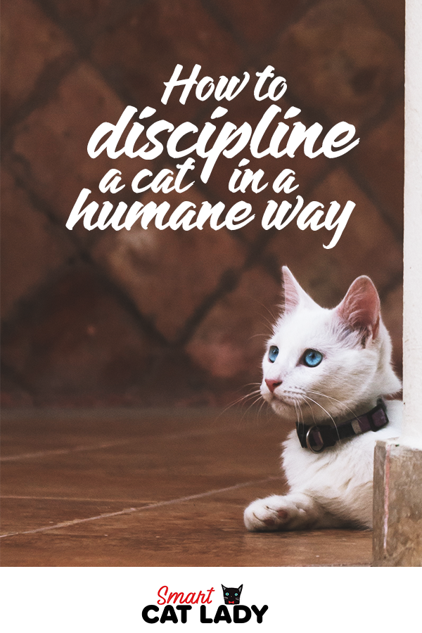 How To Discipline A Cat In A Humane Way Cats, Cat health