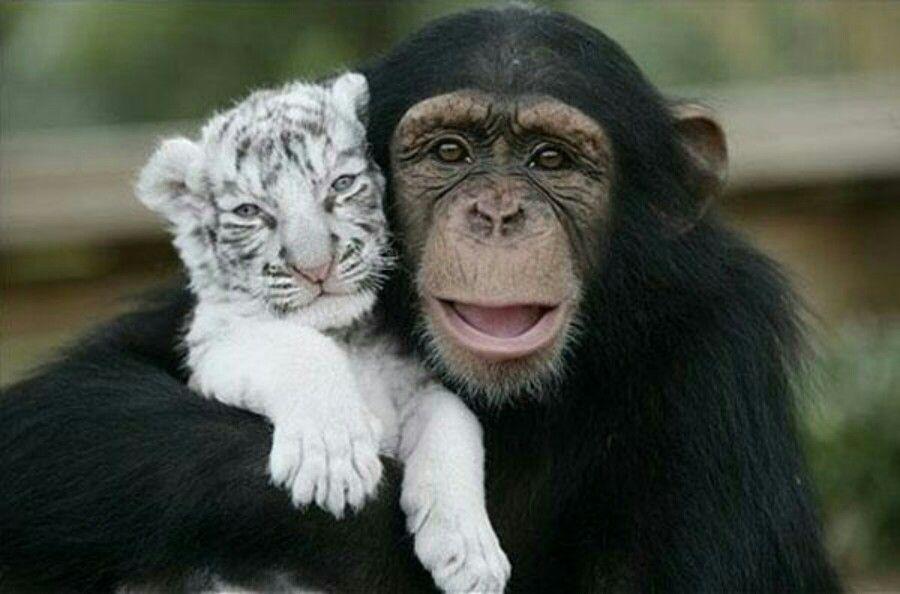 Os animais podem viver em harmonia com seres que não são da mesma espécie.