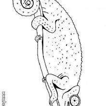 Chameleon coloring page - Coloring page - ANIMAL coloring pages ...