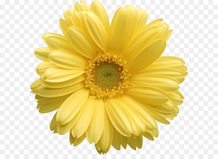 Yellow Gerber Daisy Clipart Flower Png Images Yellow Daisy Flower Oil Painting Flowers