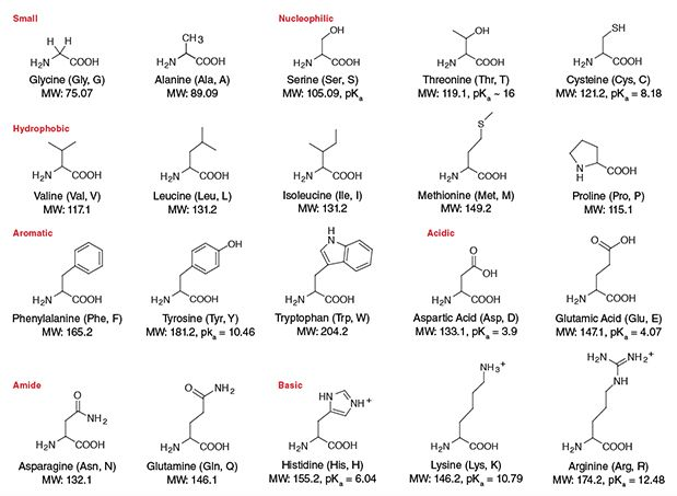 Amino Acid Structures NEB Science Pinterest Chemistry help - amino acid chart