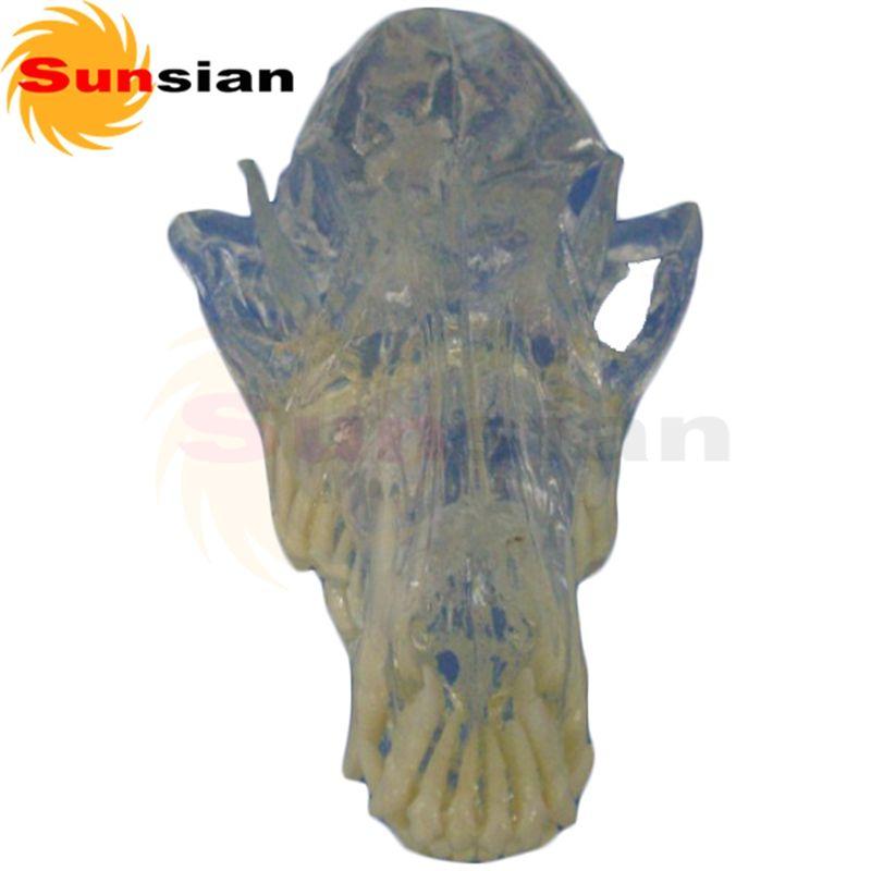 527515 Clear Canine Head Bone Model Pet Anatomical Model Animal