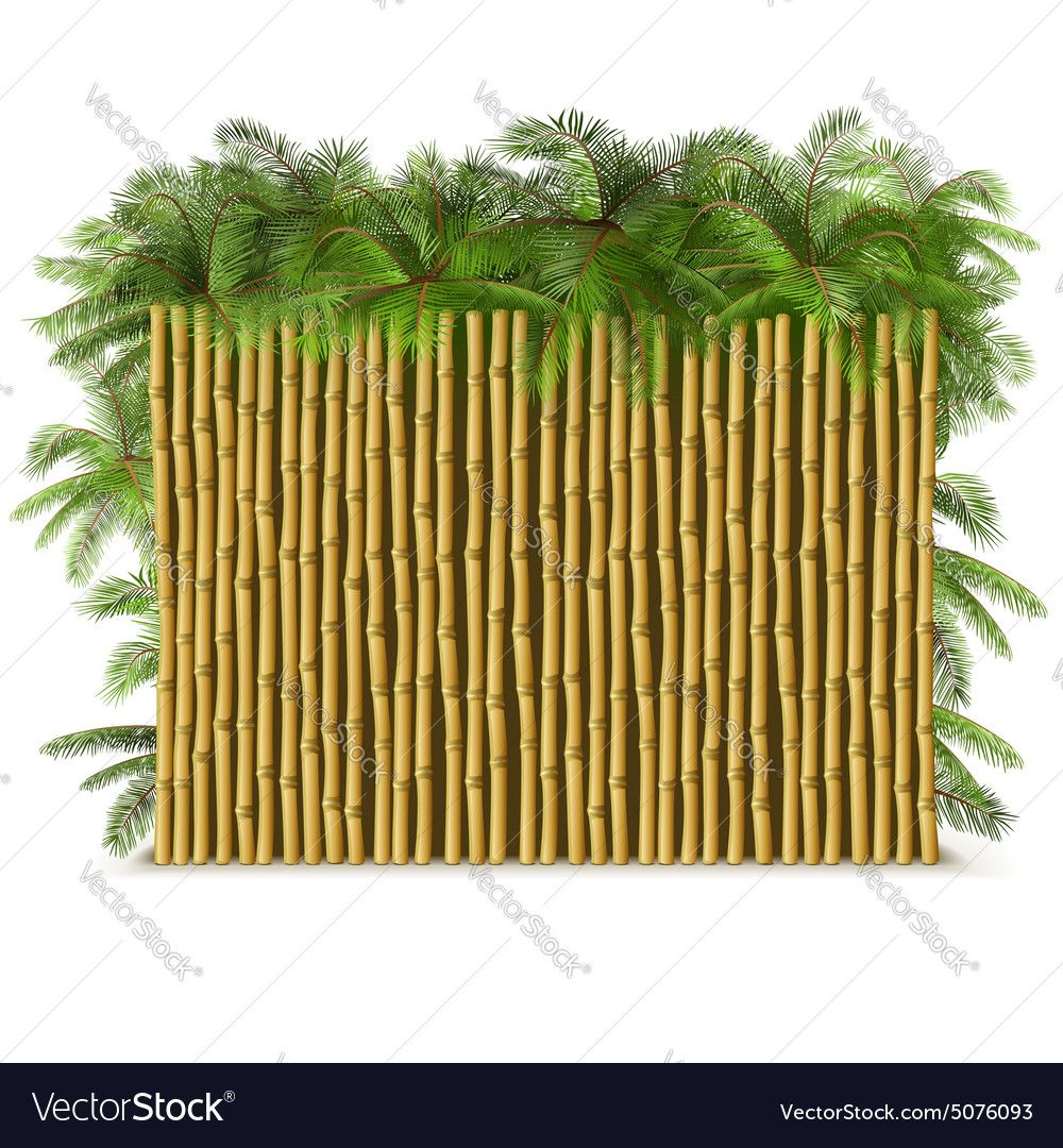 Bamboo Fence with Palm Royalty Free Vector Image