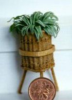 Making a miniature 'Spider Plant'.