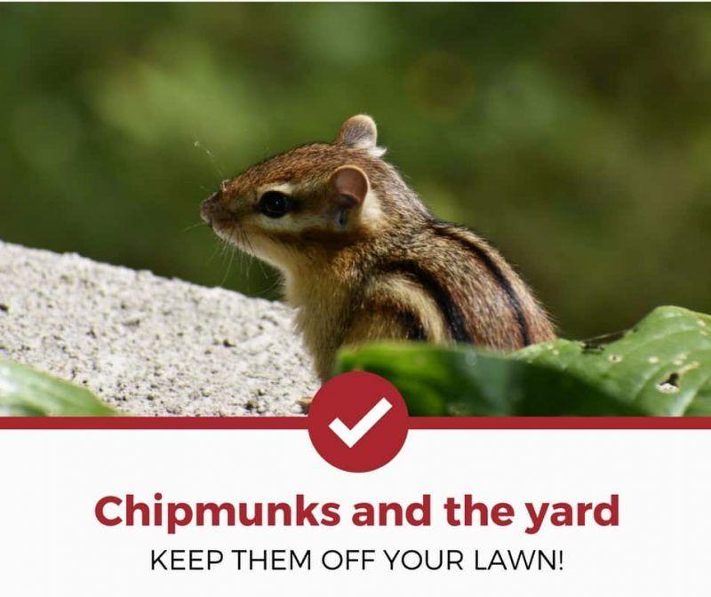 f3452421cb8e57a469db4ccb5cc74818 - How To Get Rid Of Squirrels The Natural Way