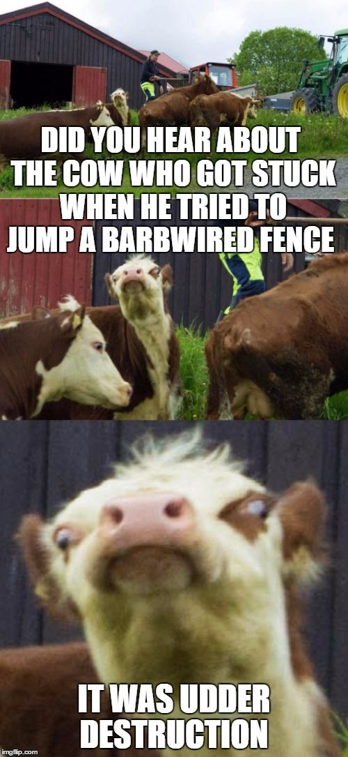 Bad Pun Cow Corny Jokes Funny Puns Dad Puns