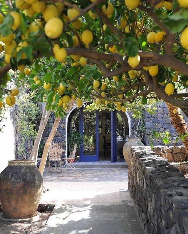 Underneath the lemon trees. Hotel Signum in Sicily. Italy #travel #europe #italy #sicilia #travelsource #catania #sicily #sicilytour #sicilianholiday #travelinsicily #sicilybaroque #igsicily #visiting #vacation #discoverearth #igsicily #igtravel #igerscatania #igerscatania #baroque #travelblogger #travelling #holidaysicily  #palermo #tourofsicily #tourguide #organizetrips #travelling #trip #winetour #outofthebittentruck #traveltruck