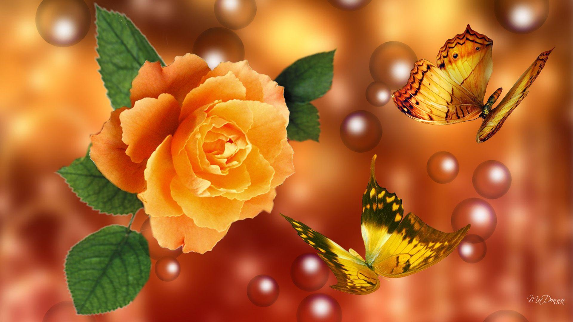 3d Yellow Rose Wallpapers Best Yellow Rose Hd Livewallpaper