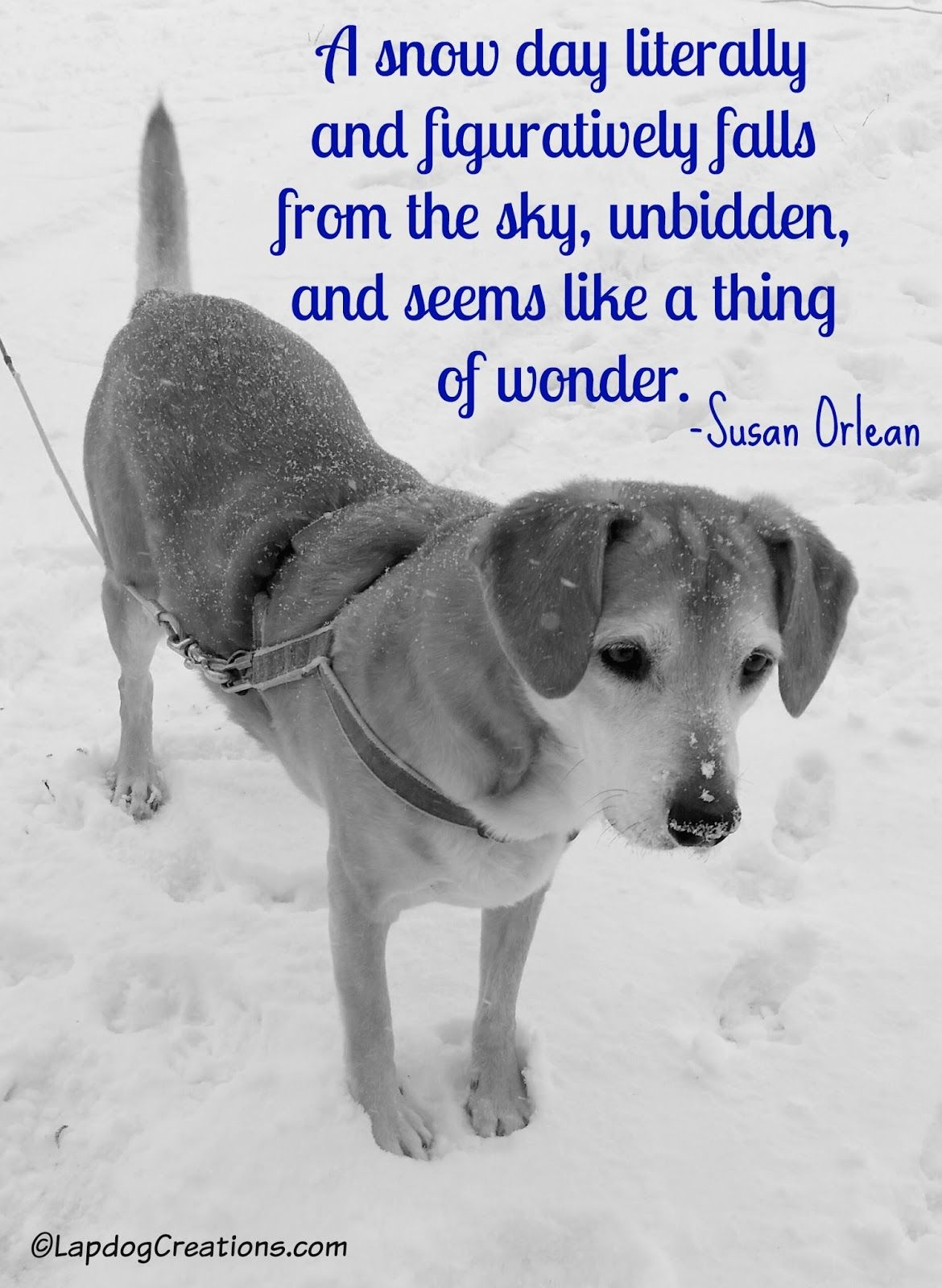 A Snow Day... #BlackAndWhiteSunday | Dog quotes, Dog ...
