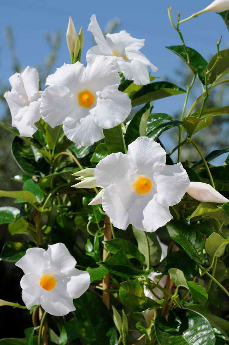 plantation avril jardin 10 fleurs et plantes planter jardin pinterest plantation. Black Bedroom Furniture Sets. Home Design Ideas