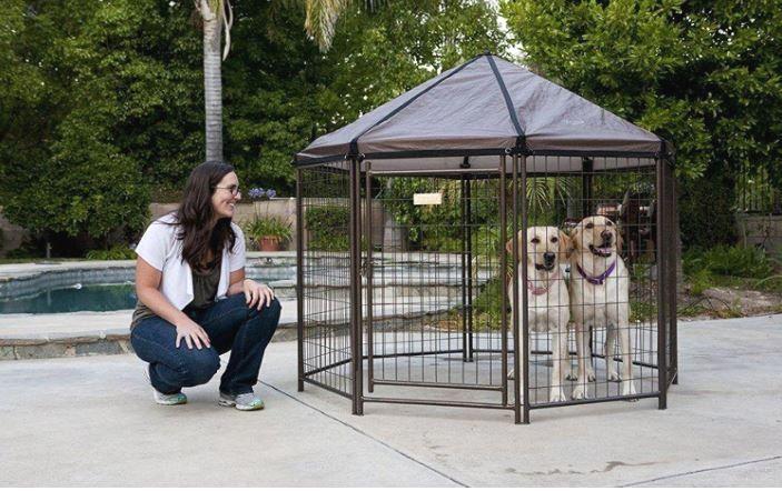 Amazon.com : Advantek The Original Pet Gazebo - Large : Pet Kennels : Pet  Supplies