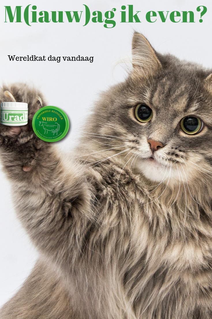 Leren Bank Katten.Leren Bank Onderhouden Bank Katten En Hoes