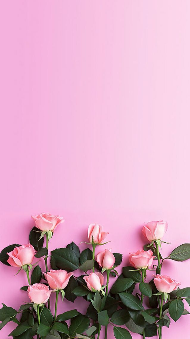 Pink roses ☆ Download more floral iPhone Wallpapers at