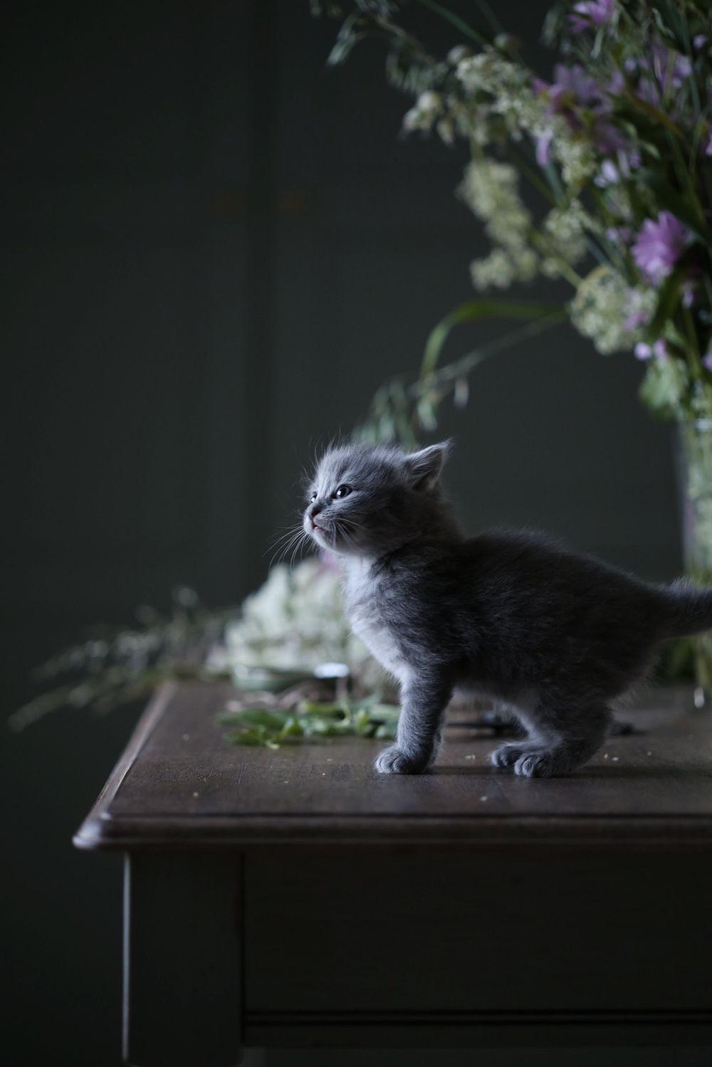 Anna Kubel Kontakt Annakubels Gmail Com Susseste Haustiere Baby Katzen Ausgestopftes Tier