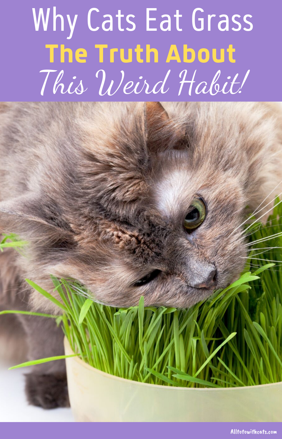 Why Do Cats Eat Grass? (The Truth Behind This Weird Habit