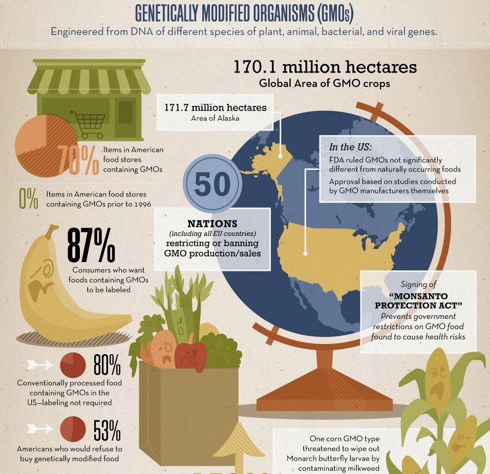 Infographic About Genetically Modified Organisms Gmos Genetics