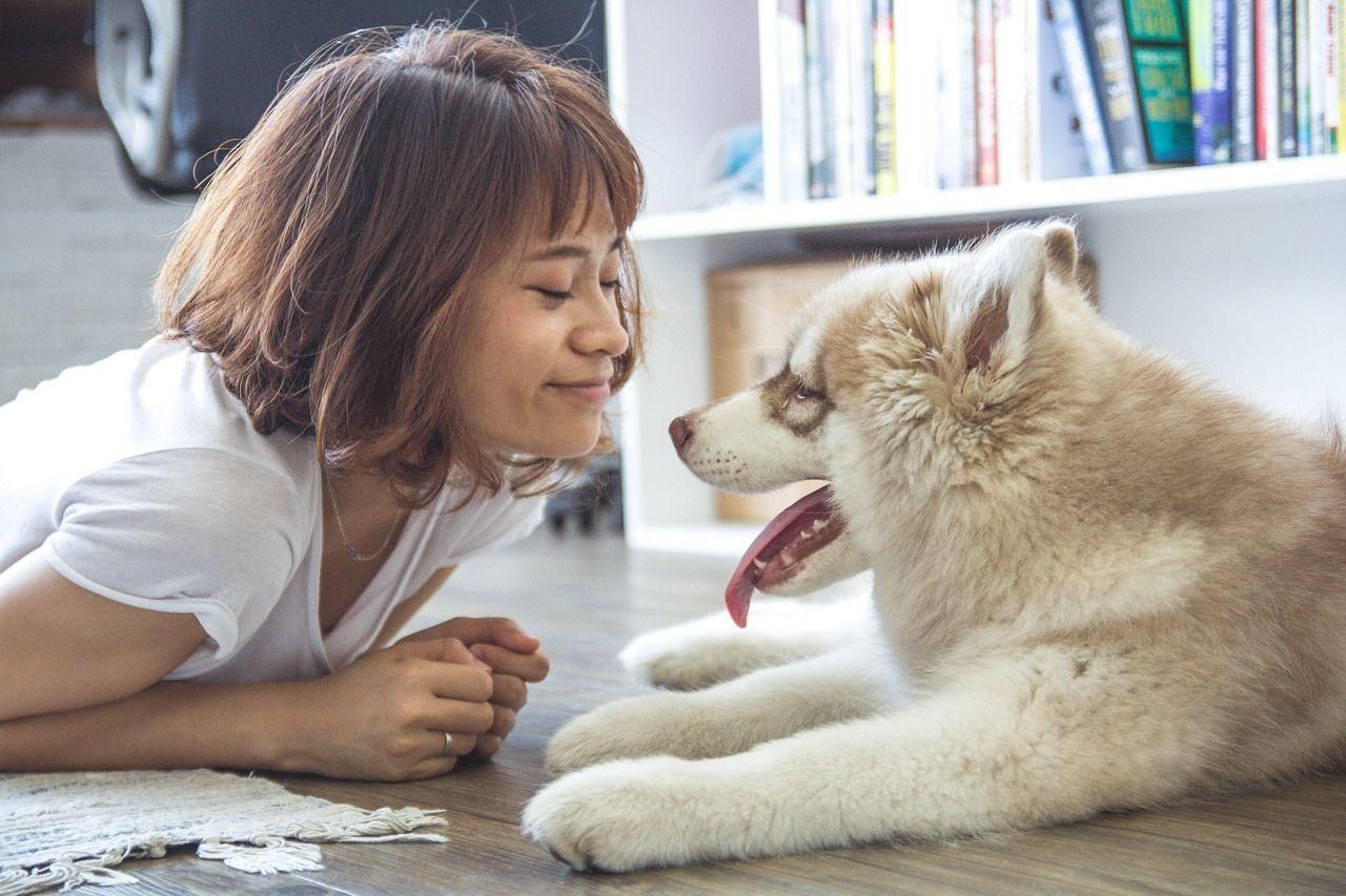 """Miten ymmärrät, milloin koirasi haluaa kertoa, kuinka paljon se tykkää sinusta? Morrr listasi viisi tilannetta, kun koirasi on yrittänyt sanoa: """"Rakastan sinua!"""", mutta et ole ymmärtänyt."""