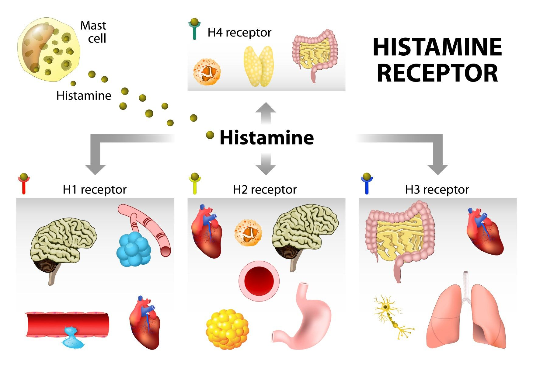 How to treat histamine intolerance foods high in