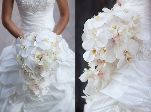 White Orchid Wedding Flowers Inexpensive
