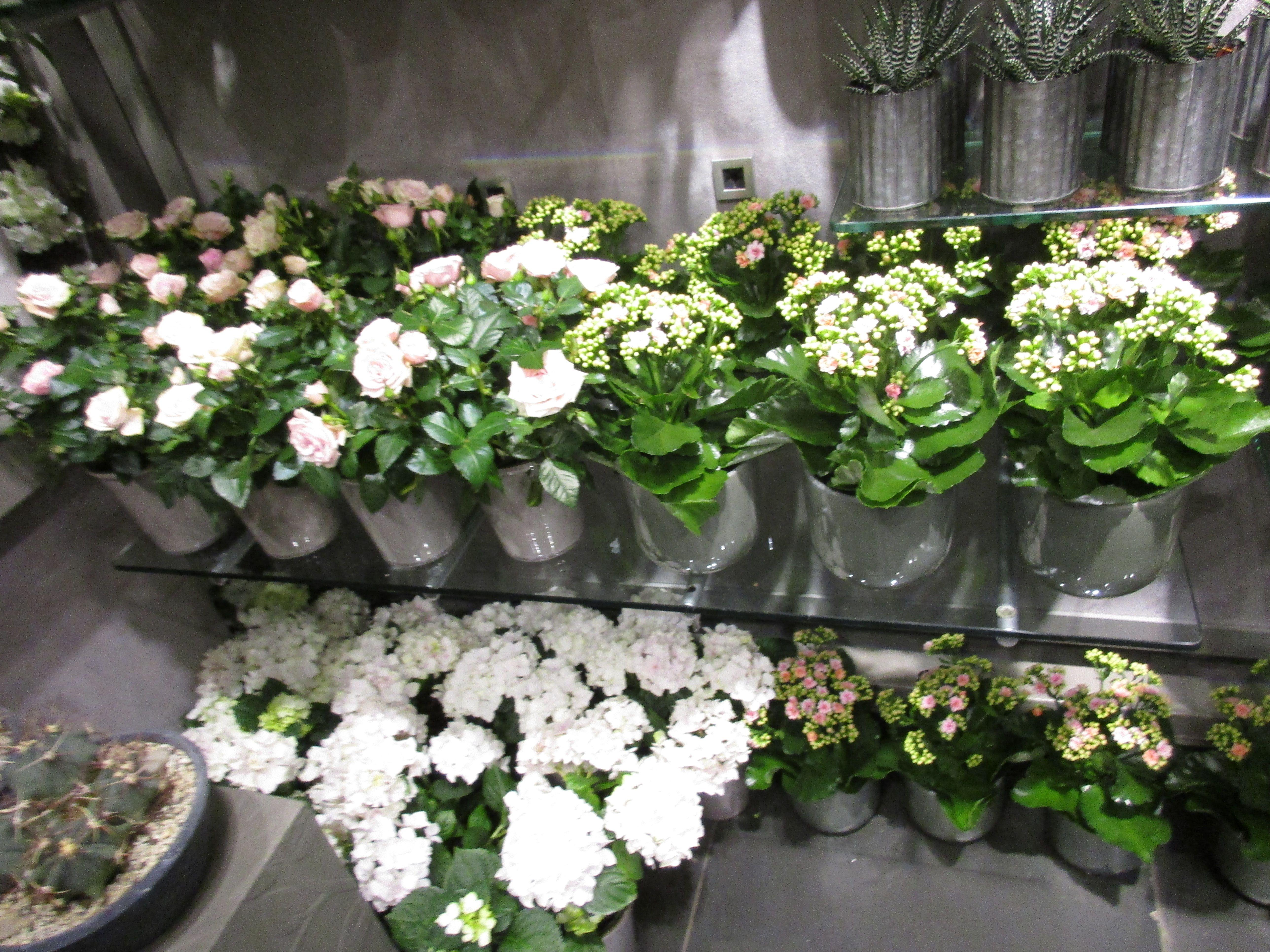 Super Hvite blomster i potte | Finn Schjøll (Storgaten) | Plants og Garden PX-65