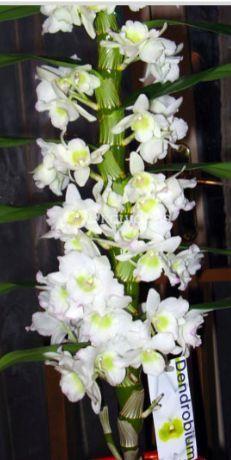 Que Faire Lorsque Mon Orchidee N Est Plus En Fleur Orchidee