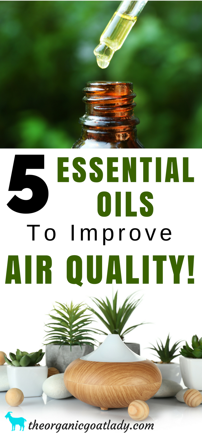 5 Essential Oils To Purify Air In Your Home! Homemade