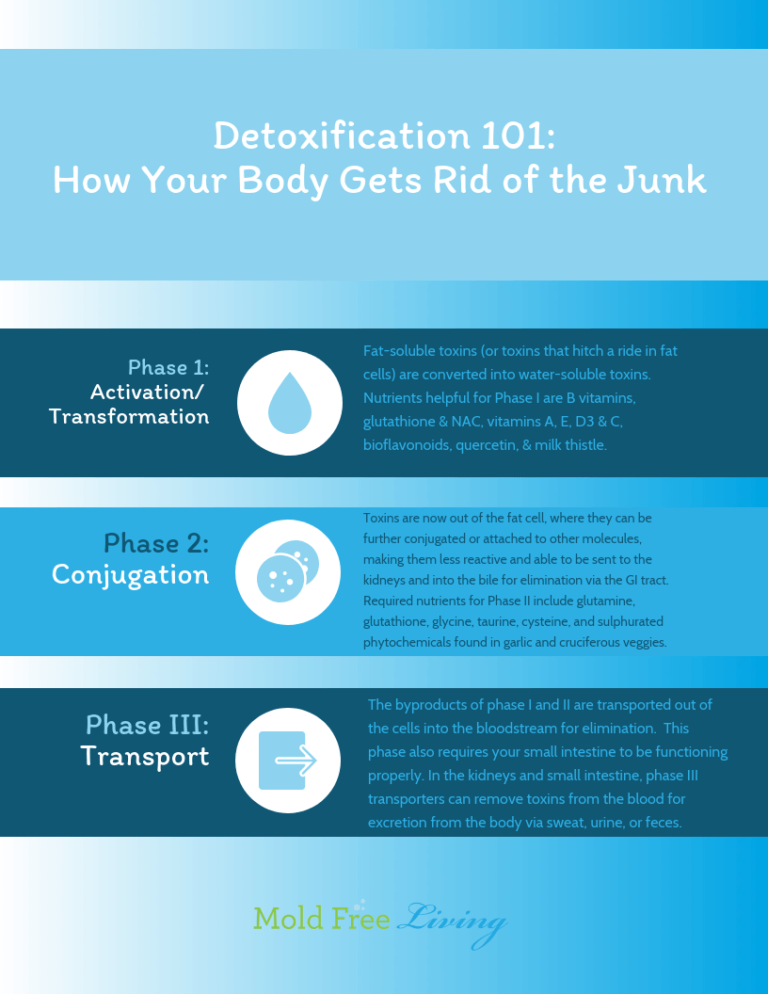 Mold Toxin Detox Focused Advice for a MoldSick Body