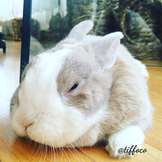 TIFFO: for those of you wondering about it... yes! I was napping when I heard the usual 'click' of the camera! #Tiffo  Follow Tiffo on Instagram @tiffoco