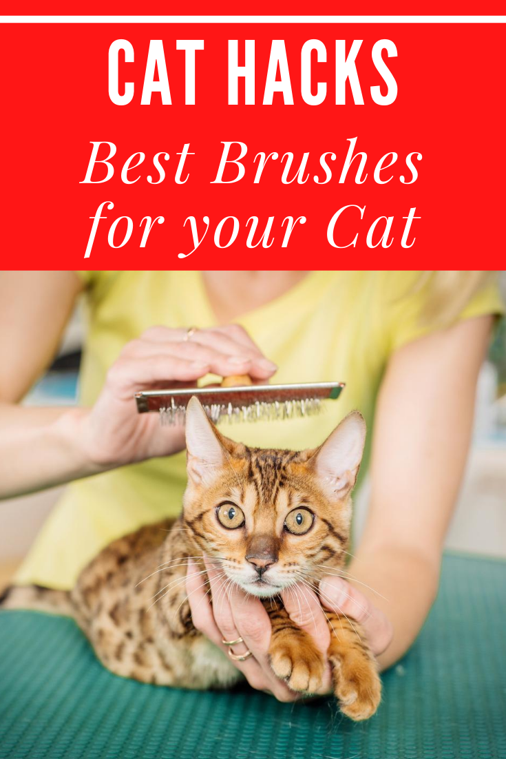 Cat Hacks Best Brushes For Your Cat In 2020 Cat Brushing Cat Hacks Cool Cats