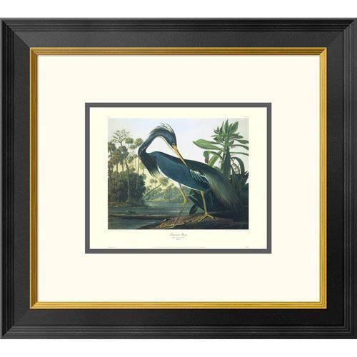 Louisiana Heron By John James Audubon, 18 X 20-Inch Wall Art With Decorative Border
