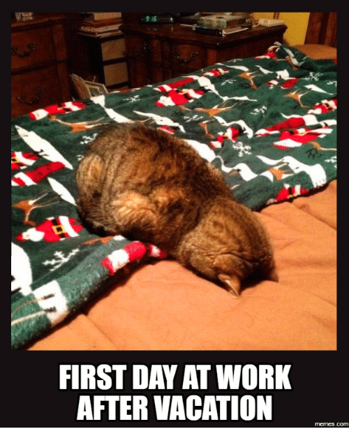 Best Memes About First Day Of Work Meme Cats Crazy Cats Funny Cats