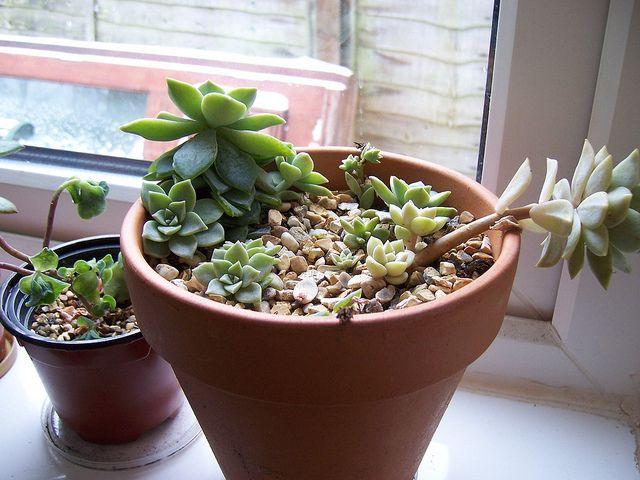Como Replantar Suculentas Amo Suculentas Planters Planter Pots